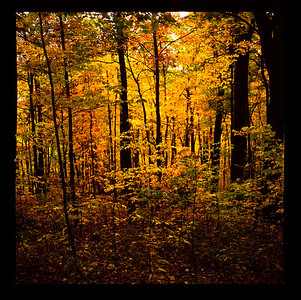 Fall Landscapes, Smokey Mountains