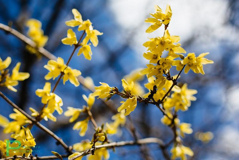 Day 2 - Spring
