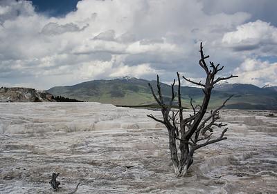 American West 2013 - Yellowstone