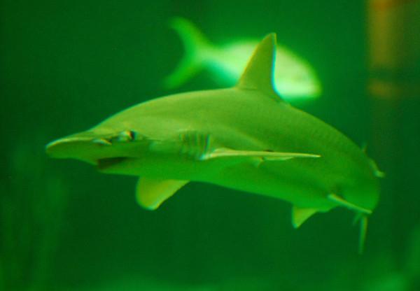 Shedd Aquarium, August 4, 2012