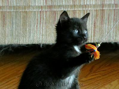 Five Kittens 7-14