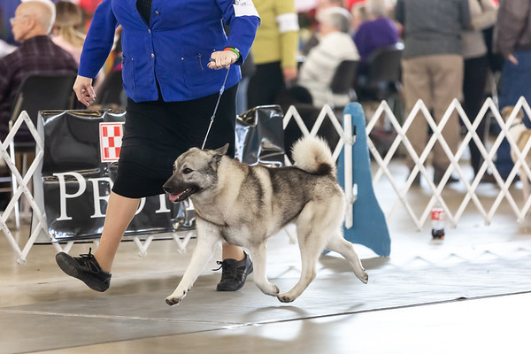 2018-12-09 Sunday Dallas Dog Show