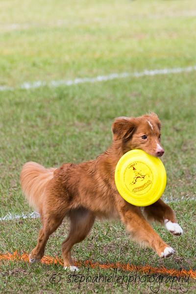 _MG_2852Up_dog_International_2016_StephaniellenPhotography.jpg