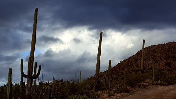 12-31-16 ASDM and Saguaro NPW