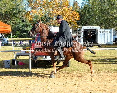 CLASS 7  - 2 YR OLD OPEN