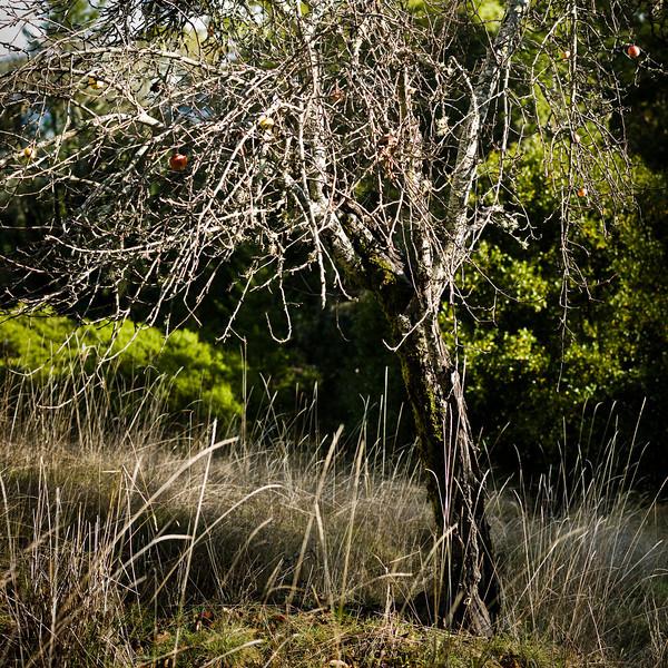 apple-trees-17.jpg