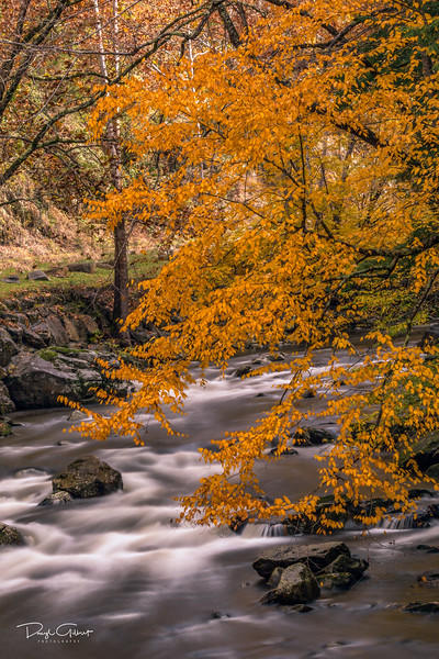 """Gold Rush in the Smoky Mountains"""