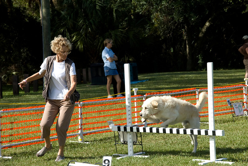The handler gives Mulligan, a Labradoodle, the command to take the bar jump during the Rally Advanced competition.