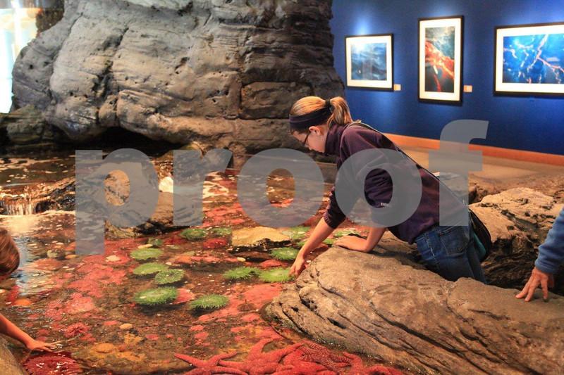 Seattle Aquarium 9124.jpg