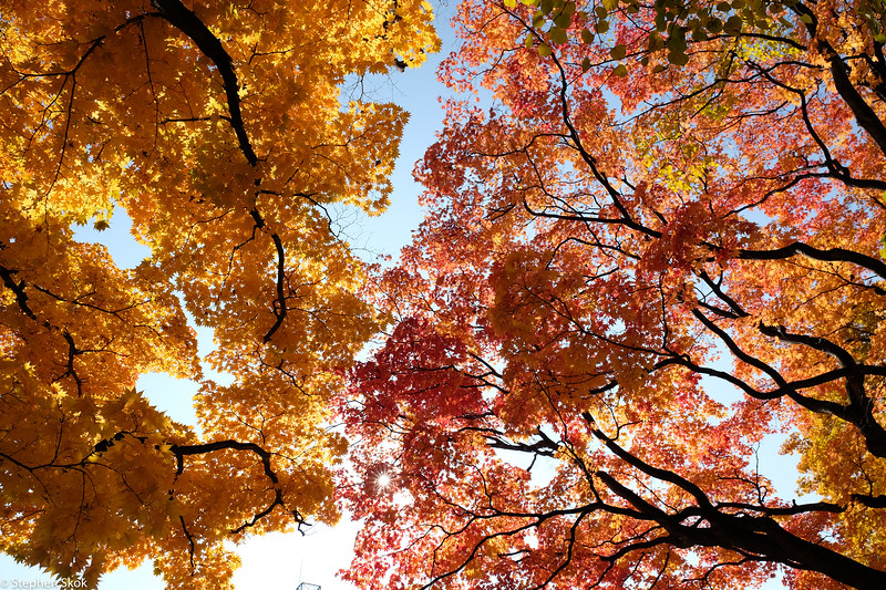 HOKKAIDO. The leaves at their best for us.