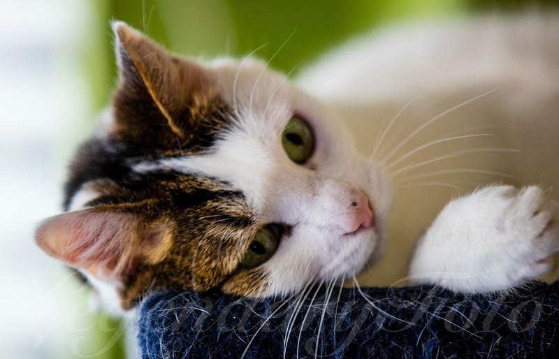 Cats_Lamborghini_3.jpg