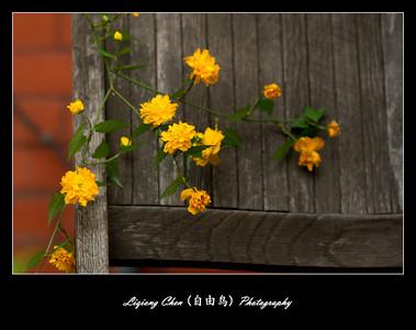 Unknown flower-29