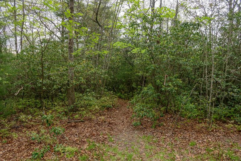 Interim Access Trail -- 2,710'