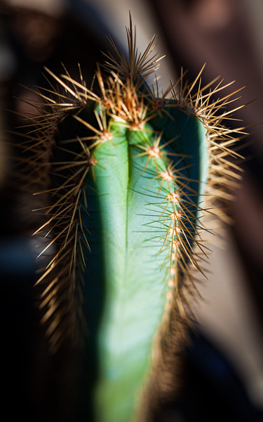 cactus-1155.jpg