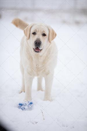 Polar Bear (Chill x Dakota) - 1 year