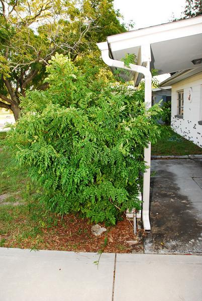 2008 09 24 - The House 077.JPG
