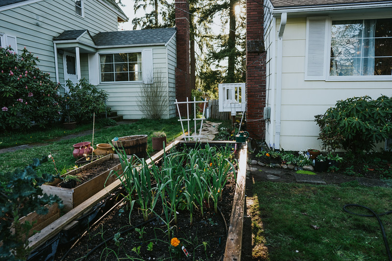 AprilAfternoon-backyard-15.jpg
