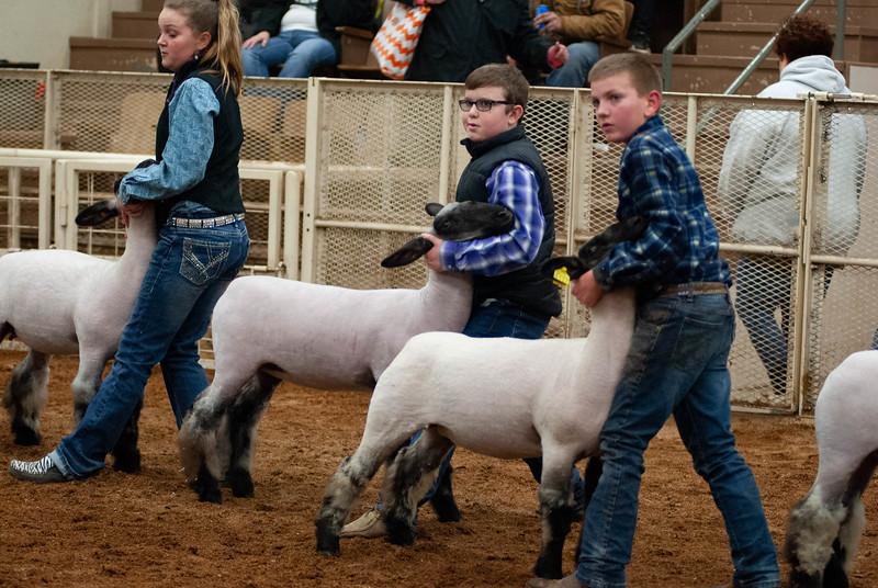 20190104_wilburton_sheep289.jpg
