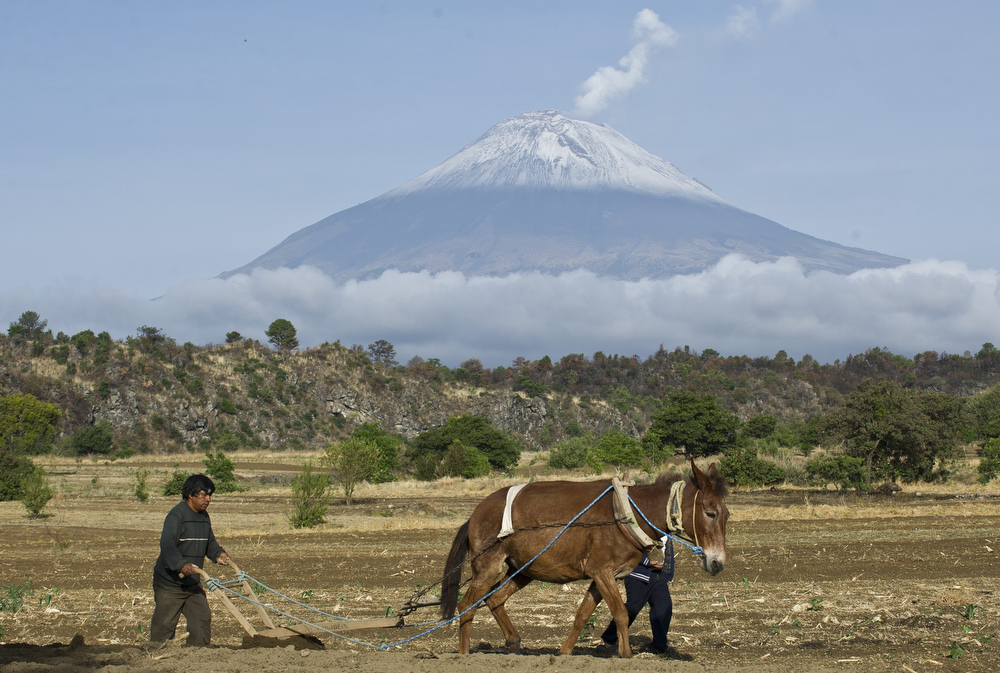 ". Backdropped by Popocatepetl Volcano, Mexico\'s second highest peak just 55 km southeast of Mexico City, a farner plows the land in San Nicolas de los Ranchos, in the state of Puebla, on May 14, 2013. The National Disaster Prevention Centre (CENAPRED) raised the alert level on Sunday to ""yellow phase three\"" as the Popocatepetl continues to spew ash and smoke.   Ronaldo Schemidt/AFP/Getty Images"