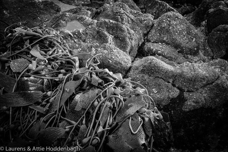 Seaweed at Beach of Carmel at sunset