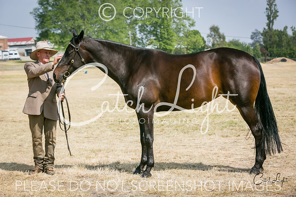 Ch/Res Led Mare