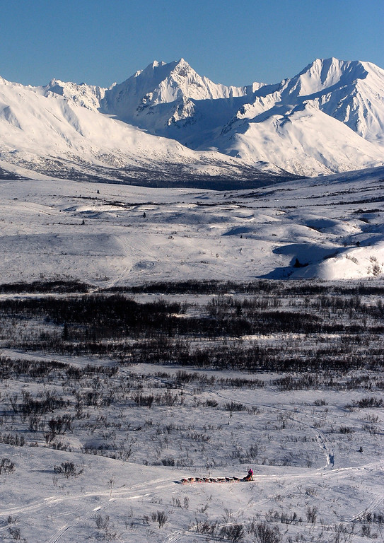 . In this March 3, 2014 photo, a musher is near the Rainy Pass checkpoint by Puntilla Lake, Alaska, during the 2014 Iditarod Trail Sled Dog Race. (AP Photo/The Anchorage Daily News, Bob Hallinen)