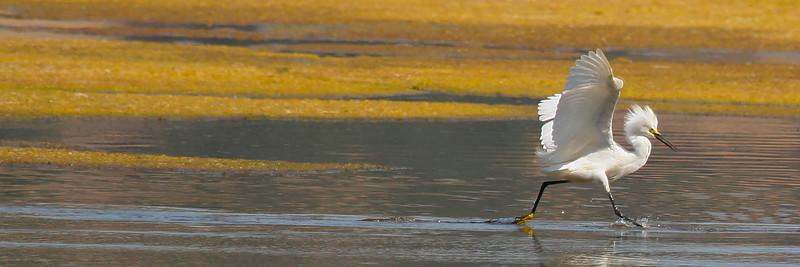 Egrets, Cranes, Shorebirds, Ducks
