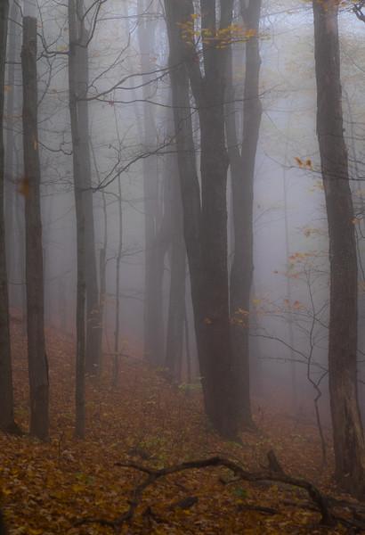 Tall Mist