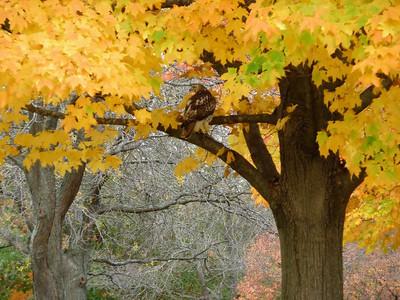 October 14th Minooka Park
