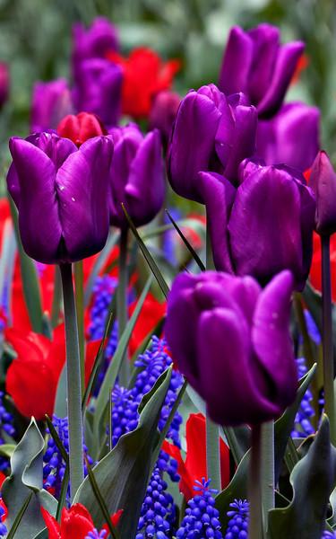 Spring in Central Park.jpg