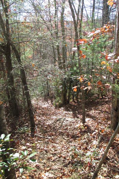 Little Green Trail - 3,960'