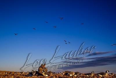 29025 Hunting waterfowl