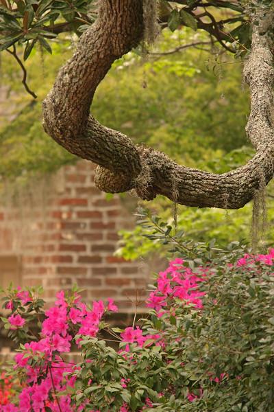 WB~Beaufort Garden~Carol Etch.psd