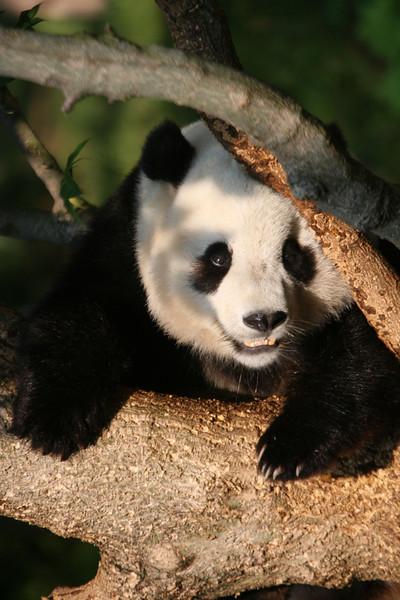 Panda072807_052.JPG