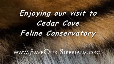 Cedar Cove Feline Conservatory