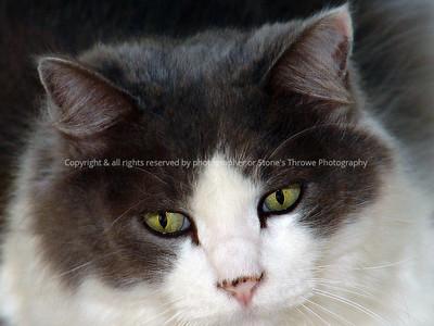 018-cat-madison_co-24oct04-0118