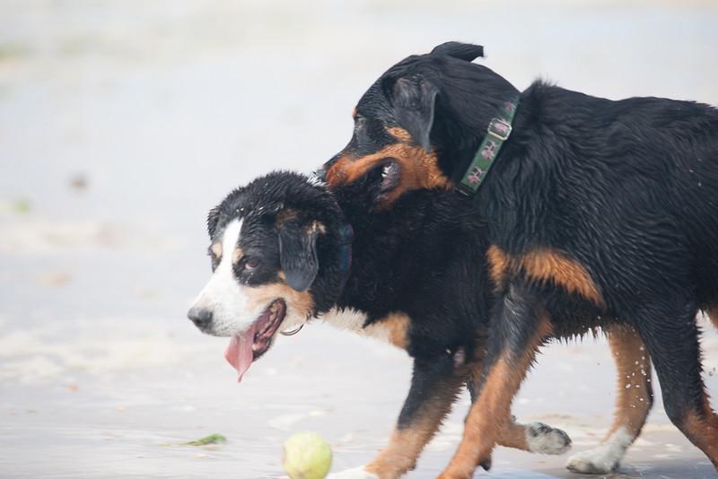 honden-05684.jpg