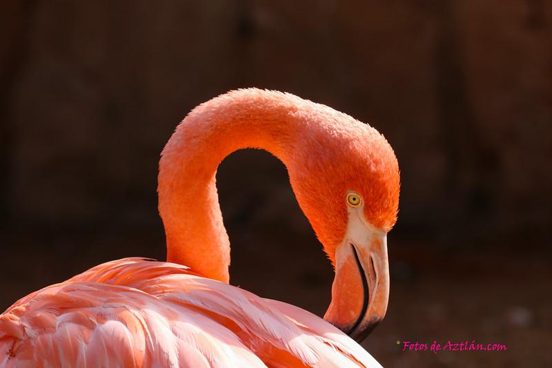 Flamingo IMG_0922.jpg
