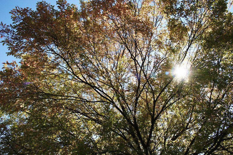 Sunshine through the trees on the campus of Gardner-Webb University on a Fall morning.