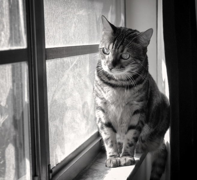Mia on windowsil b&w.jpg