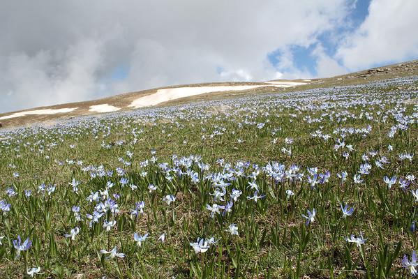 Georgia south of the Caucasus, spring 2011
