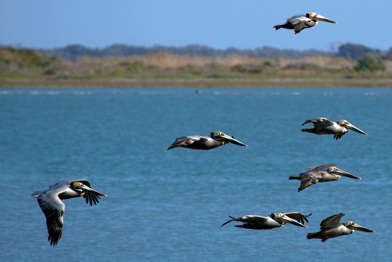 Nine of the pelican formation.