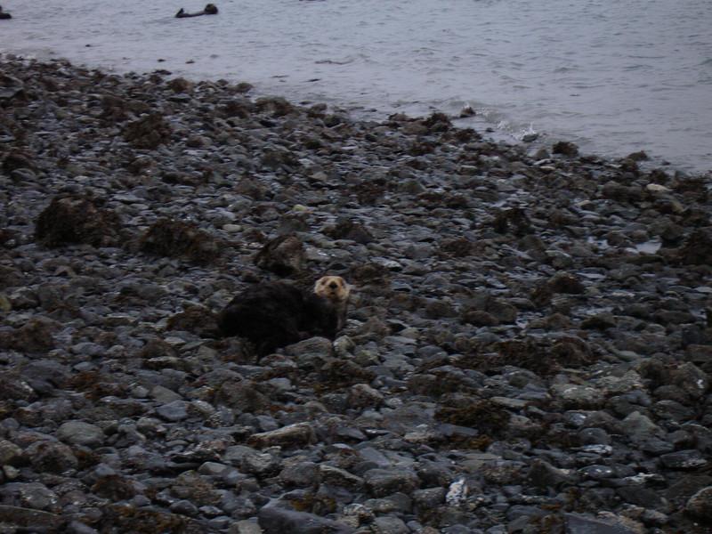 Alaska 2008 082.jpg