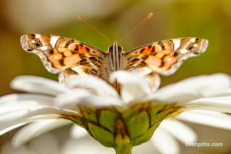 sm butterfly effect_M4D3469-3.jpg