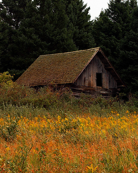 Abandoned Cabin among Autumn's Wildflowers and Grasses