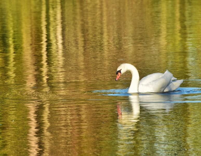 Savannah Swan, Georgia