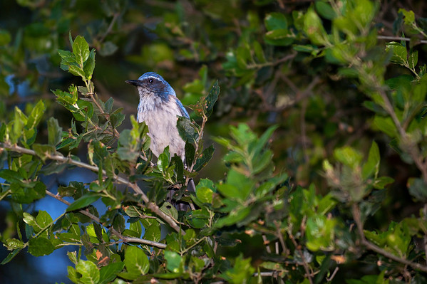 Stanford Dish Birds