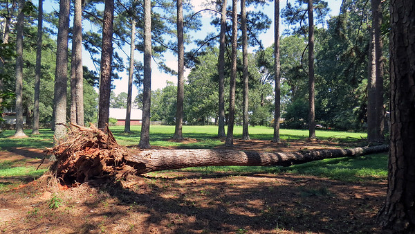 July 29, 2017:  Neighbor's giant pine tree fell over .  .  .