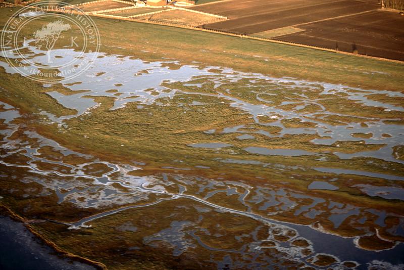Salt marsh landscape in the southern part of the Öresund, between Hammarsnäs to Tygelsjö meadows in Southwest Skåne (12 December, 1987). | LH.0154