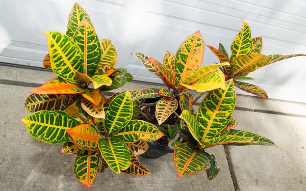 JJ's Plant